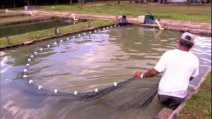 Tecnologia de baixo custo para criação de peixes